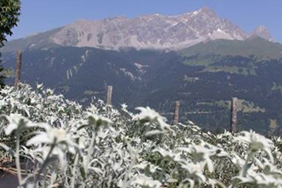 Picture of OVAVERVA Edelweiss-Trilogie